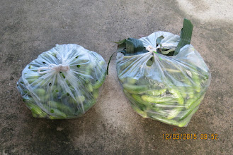 Photo: Fresh Cucumbers were delivered for tomorrow meals