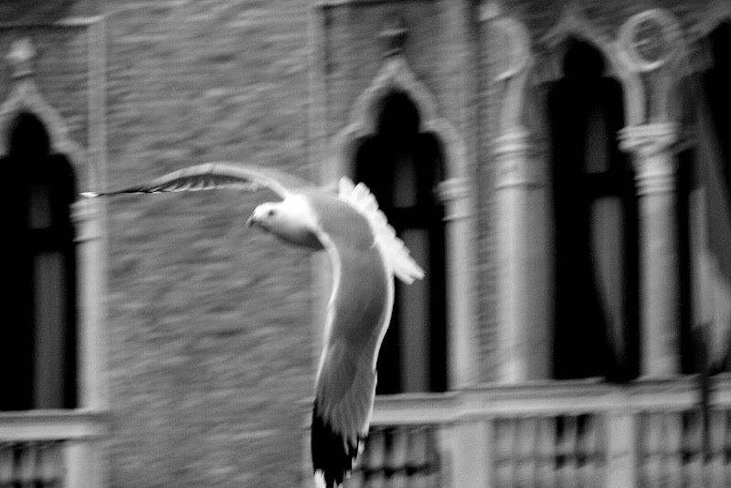 Volo in libertà di Andrea F