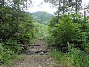 左に植林用林道