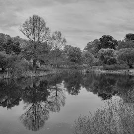 The Arnold Arboretum of Harvard University by Paul Gibson - Black & White Landscapes