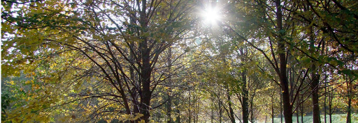 Arboretum de corbé de saint-benoit-la-chipotte
