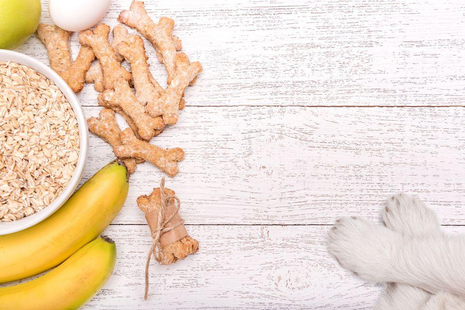 Homemade remedies for dogs -  oatmeal for dogs