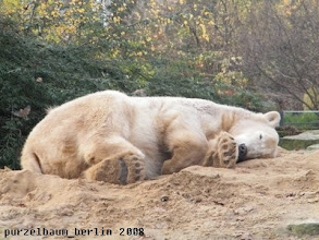 Photo: Und schon wird weitergeschlafen ;-)