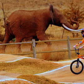 by Melody Pieterse - Sports & Fitness Cycling (  )