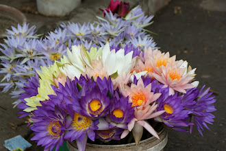 Photo: Year 2 Day 55 -  Pretty Flowers