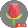 Rose Wallpapers 4K Rose Backgrounds APK Icon
