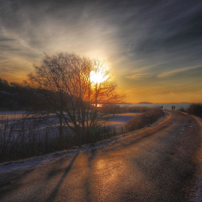 Walk to the Sunset Sweden  by Eva Larsson - Landscapes Sunsets & Sunrises ( trees sunset road winter sky sweden coastline )