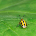 Three-lined Potato Beetle