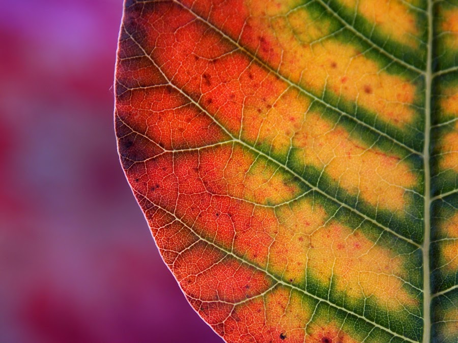 by OL JA - Nature Up Close Leaves & Grasses (  )