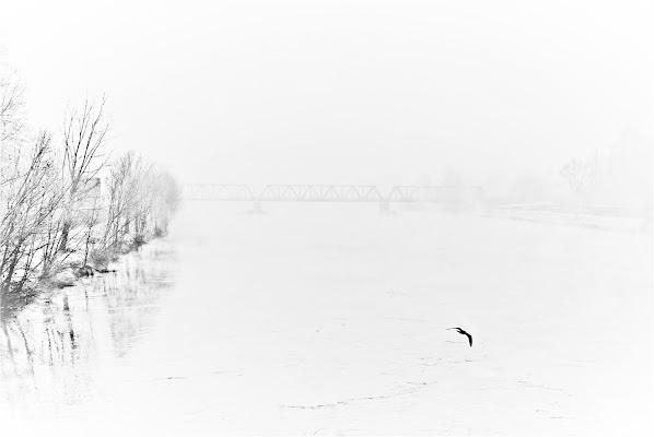 Volo via dall'inverno. di Daimon