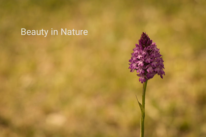 Beauty in Nature  di SG67