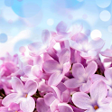 Lilac Wallpapers icon