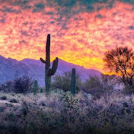 Mid Mountain by Charlie Alolkoy - Landscapes Deserts ( desert, sunset, cactus )