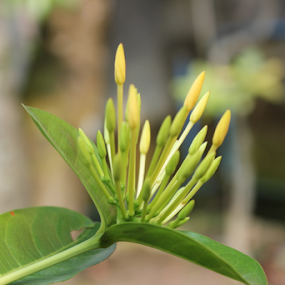 by Som Nath - Nature Up Close Other plants (  )