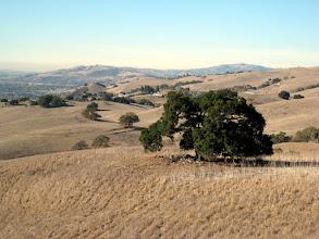 Photo: Cows hiding from the (weak) November sun
