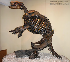 Photo: Harlan's ground sloth (Paramylodon) is an extinct genus of ground sloth. Paramylodon measured about 10 ft in height and weighted as much as 2400 lbs.