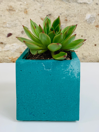 plante dans pot design en béton bleu TURQUOISE