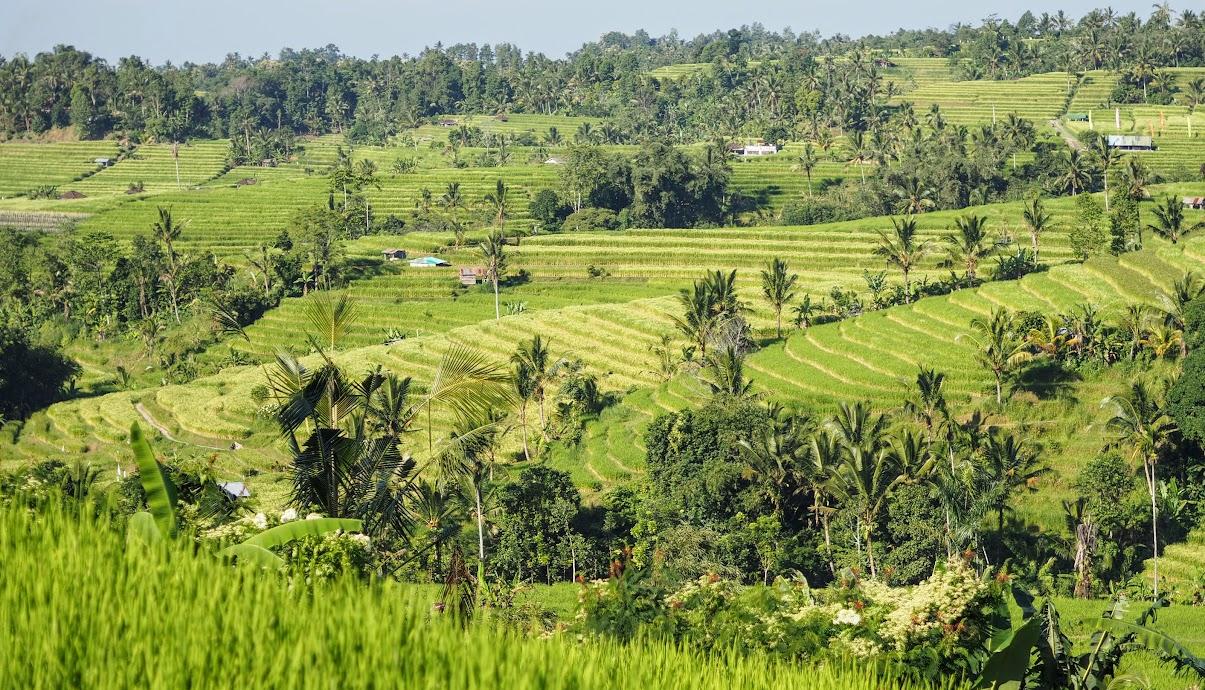 The UNESCO nominated Jatiluwih, Bali