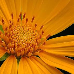 Harmony #1 by Danang Sujati - Nature Up Close Flowers - 2011-2013