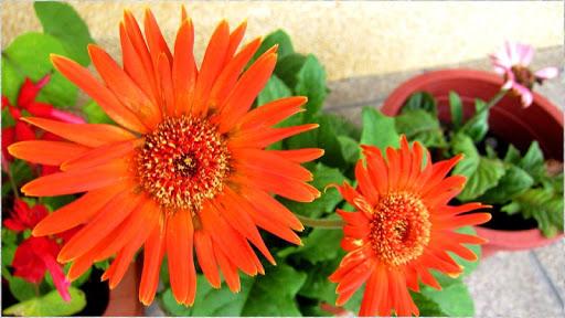 1080p Nature Flowers Pics
