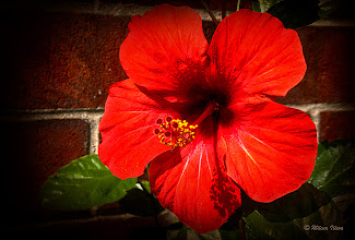 Photo: http://www.artflakes.com/en/products/red-hibiscus-2