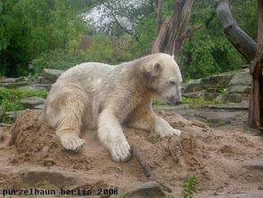 Photo: Knut nimmt auf seinem Sandhaufen Platz ;-)