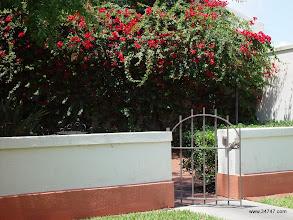 Photo: Columbia Courtyard, Town Center, Celebration, FL