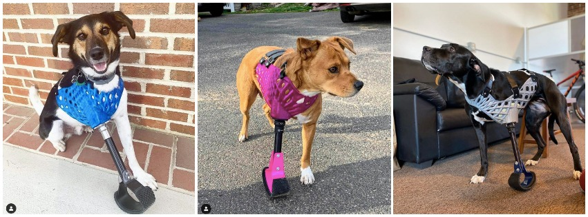 Several Happy Bionic Pets, Sporting Their Custom-Fabricated Harnesses and Prostheses