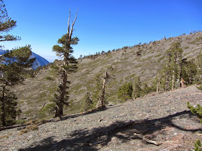 Photo: View northwest from the south ridge of Dawson Peak. This area burned years ago.