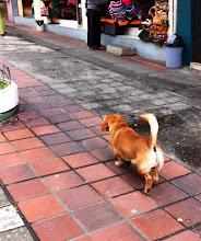Photo: Baños, Ecuador.  June 2012.