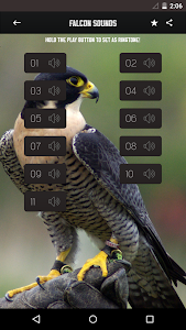 Peregrine Falcon sounds screenshot 0