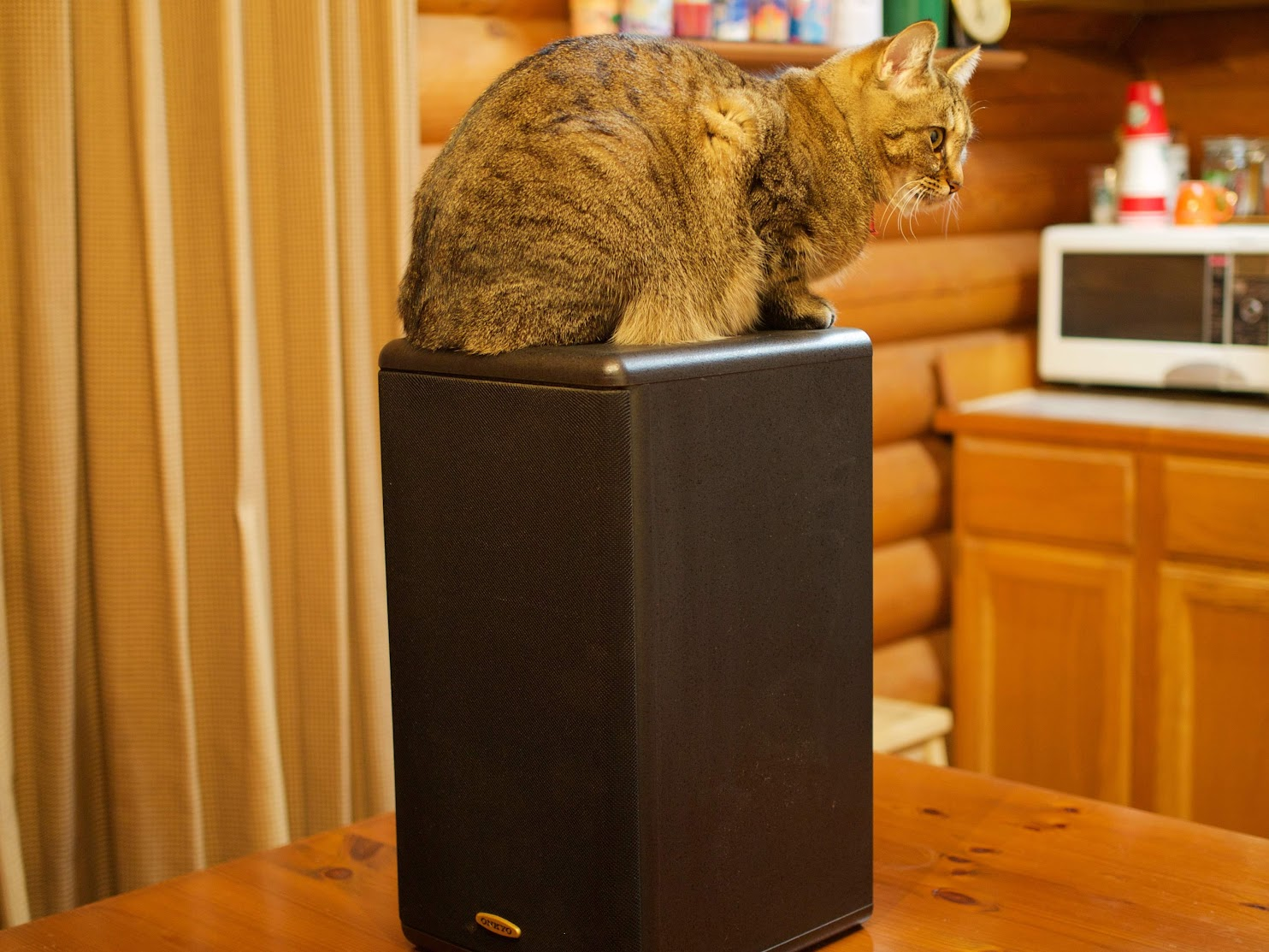ONKYO D-303 and Cat ISON