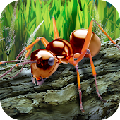 Ants Survival Simulator - go to insect world!