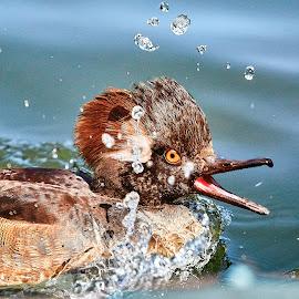 0 Bird 99140~Q by Raphael RaCcoon - Animals Birds
