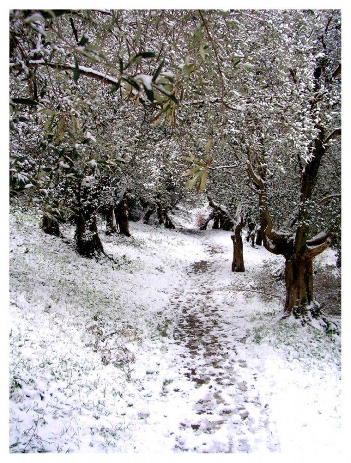 Tragitto in neve di Pearl