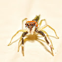 Elegant Golden Jumper