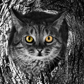Owl cat by Paul Drajem - Animals - Cats Portraits ( cats, kitten, feline, tree, black and white, abstract, portrait,  )