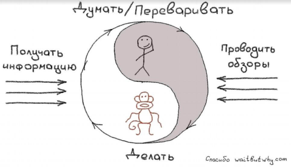цикл обезьянки.jpg