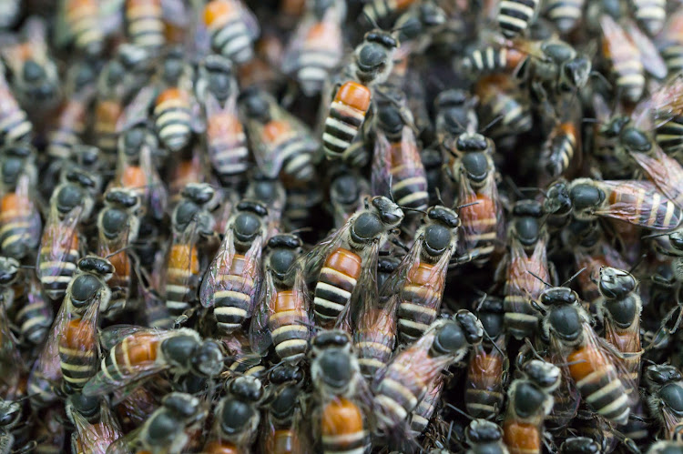 According to StatsSA, 109 deaths caused by hornets, wasps and bees were documented between 2001 and 2011. File photo,