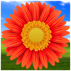 Gallery photo viewer,photo,my photo,picture folder