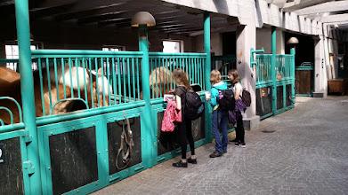 Photo: 1. den - Pivovarští koně (Carlsberg, København)