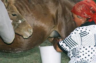 Photo: 03163 ブルド/ハスバータルイ家/馬乳をしぼる/一日に6回、2時間おきに搾乳