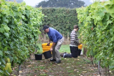 Vineyard nominated as UK's most popular