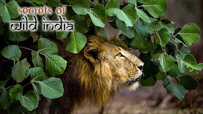 Secrets of Wild India thumbnail
