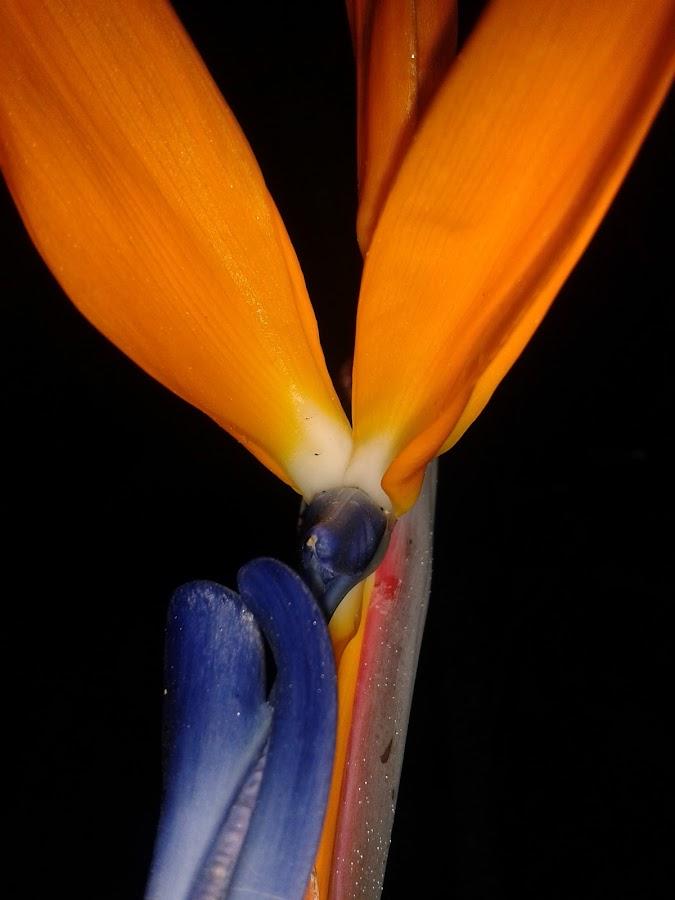 Flower Heart by Marilyn Kruger - Instagram & Mobile Android
