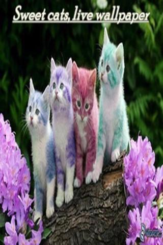 รูปแมวน่ารัก Free HD