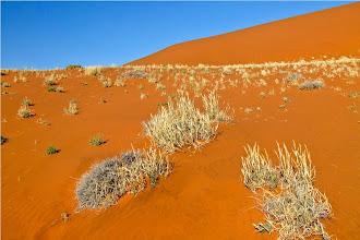 Photo: ciuffi d'erba nel Namib