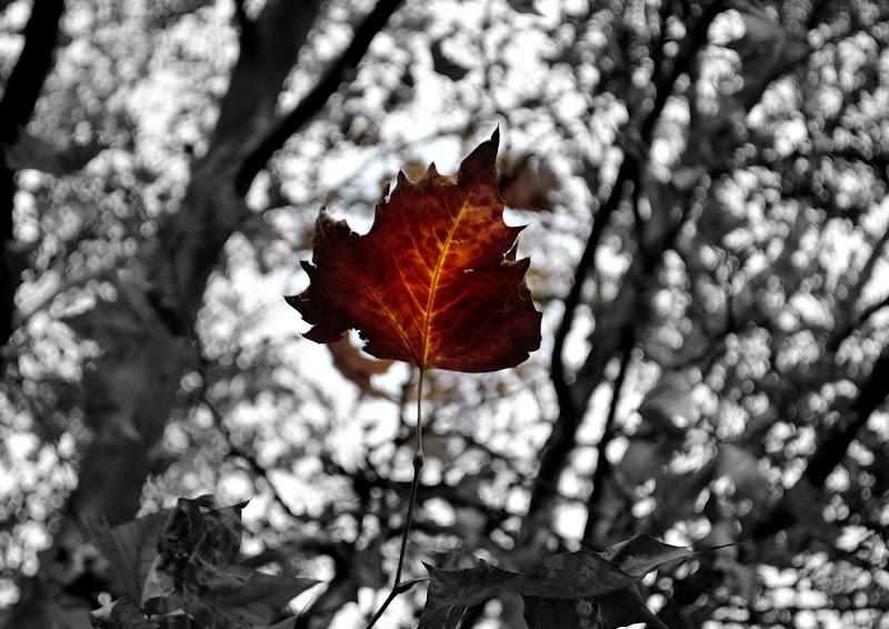 One leaf, feeling alone. di Fede_iu