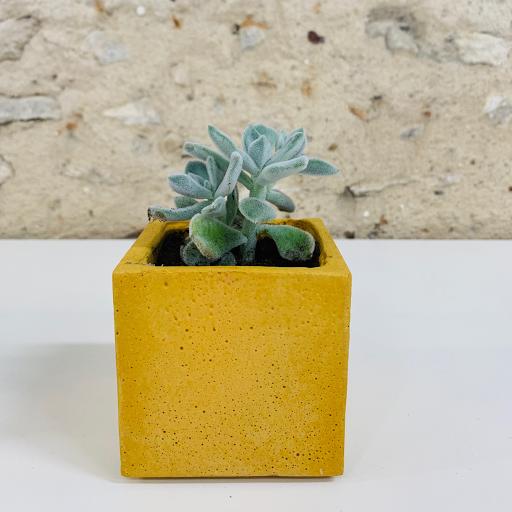 pot en béton coloré jaune avec succulente