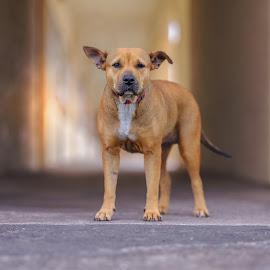 Ladybird - Survivor of Hurricane Harvey by Phil Anderson - Animals - Dogs Portraits ( shelter, medium format, gfx, fuji, dog portrait )